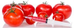 GMO (ang. Genetically Modified Organism) to organizmy, których geny zostały zmienione przez człowieka w celu uzyskania ich nowych korzystniejszych cech.